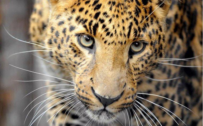 National Geographic Wild in etalage bij Ziggo