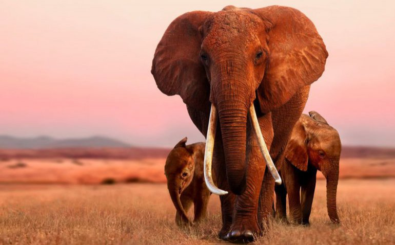 The Elephant Queen tijdelijk gratis bij Apple TV
