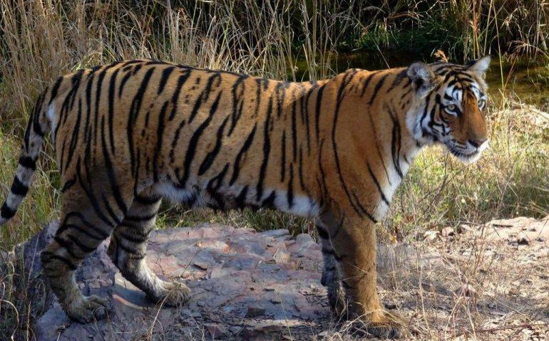 Ziggo kiest voor Nat Geo Wild, KPN voor Animal Planet