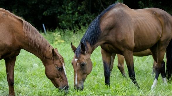Horse & Country blij met doorgifte bij UPC